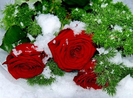 Тепла и Счастья Вам ..!
