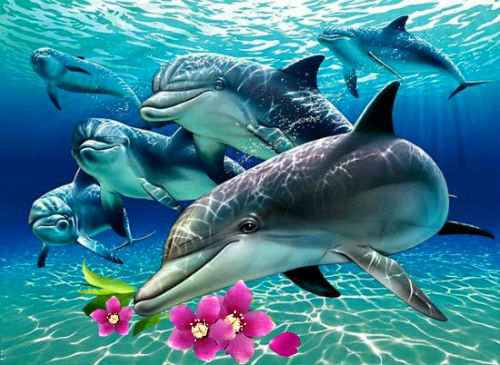 День защиты млекопитающих - День китов и дельфинов