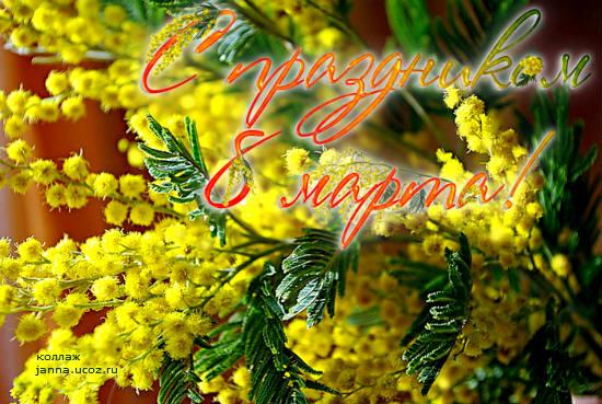 Цветы - мимоза открытка с 8 Марта