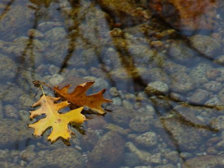 Поздняя Осень ...