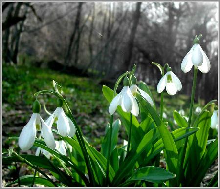 1 марта - Первый весенний день !
