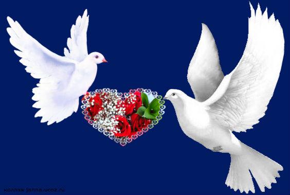 Птицы Мира - Друзья, Мир, Дружба, Добро и Позитив Земле !
