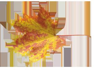 Видеть осень какой она есть