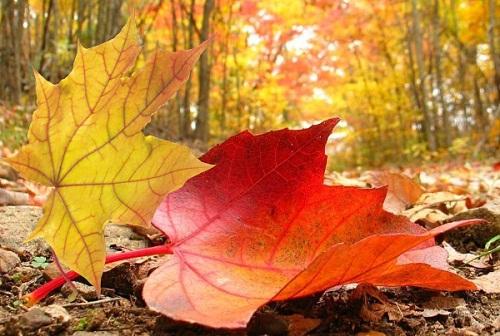 Пусть Ваша осень будет счастливой !