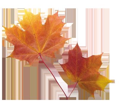 И... Одета осень в алый бархат, И крутит рядом листопад.  И листья, пьяные от ягод Уж скоро в небо полетят.