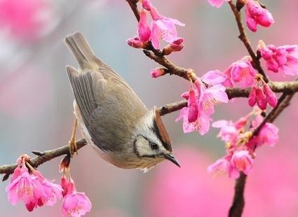 1 марта - Первый День весны !