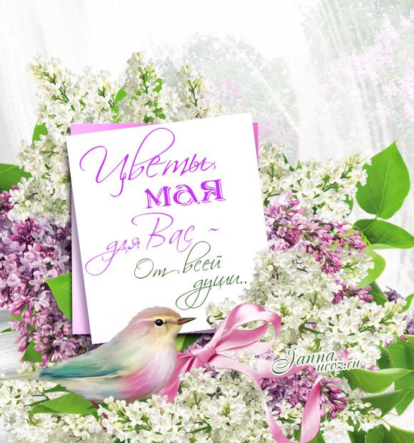 Весенняя открытка - Цветы мая - Сирень