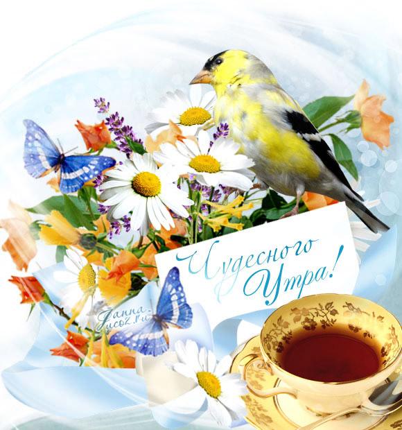 Летние открытки - Доброе Утро